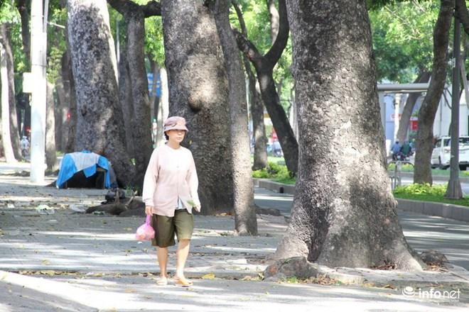 TP.HCM: Ngắm hàng cây cổ thụ gần 100 tuổi trước giờ đốn hạ và di dời - Ảnh 2.