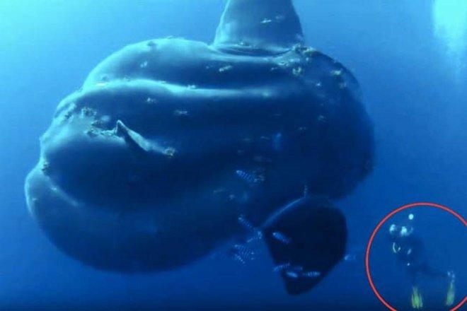 Trốn tránh giới khoa học 130 năm, loài cá khổng lồ nặng 2 tấn đã bị phát hiện - Ảnh 1.