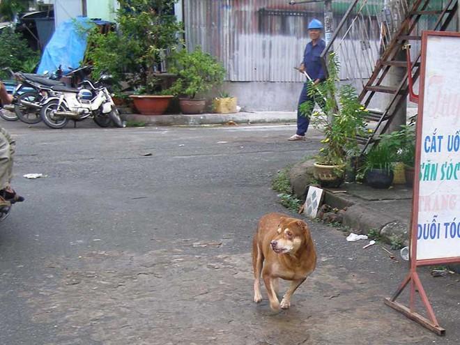 Dân TP.HCM mất hơn 26 tỉ/năm do chó cắn - Ảnh 1.
