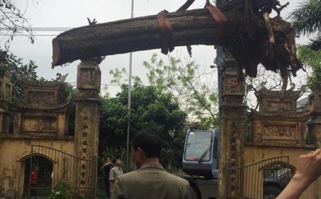 """Cận cảnh """"báu vật"""" giá 24,5 tỷ nằm chỏng chơ trong xó nhà đại gia Bắc Ninh"""