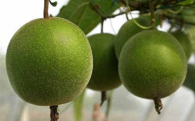 5 bài thuốc chữa bệnh quý nhất từ loại trái cây bình dân có nhiều ở Việt Nam