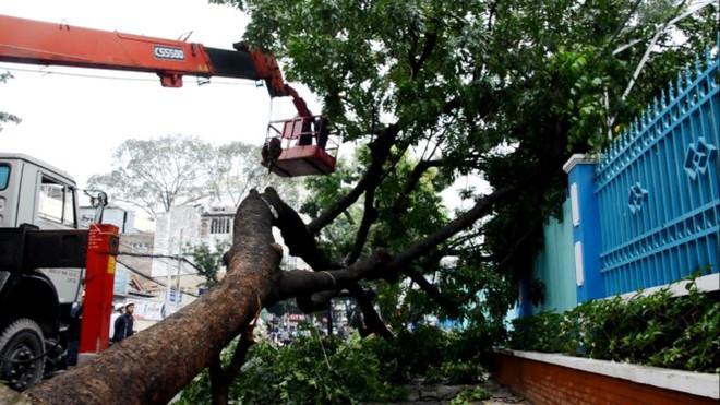 Cổ thụ cao 20m bật gốc trước cổng trường ở Sài Gòn - Ảnh 2.