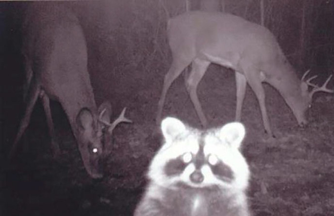 Đặt máy quay lén động vật, thợ săn bất ngờ khi thấy những hành vi kỳ lạ của chúng - Ảnh 2.