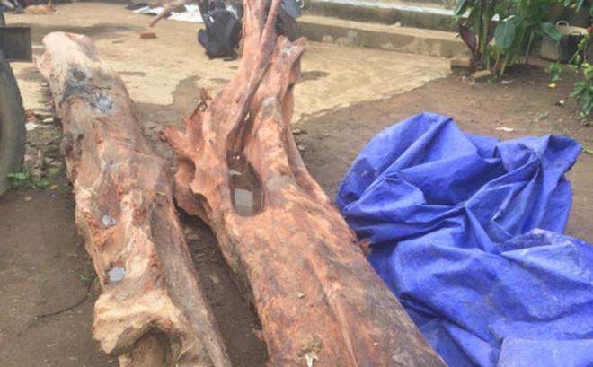 Đào được cây gỗ trắc đỏ quý hiếm, chủ nhà mất ngủ để trông coi