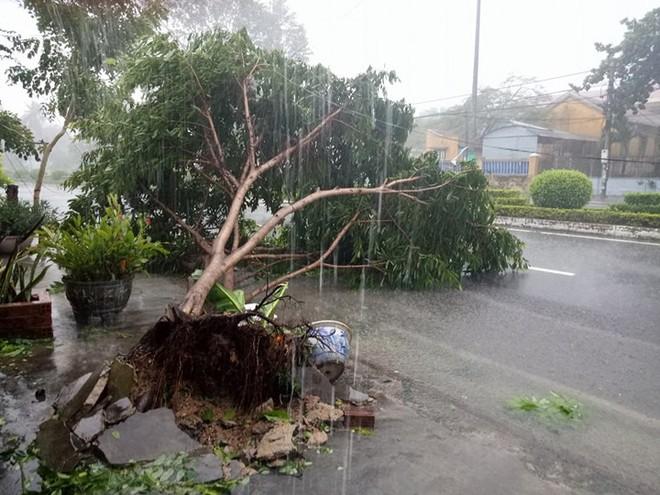 Phú Yên: Từ nhỏ tới giờ mới thấy bão gió lớn thế này, bão rít từng hồi, mái tôn đập rầm rầm - Ảnh 3.