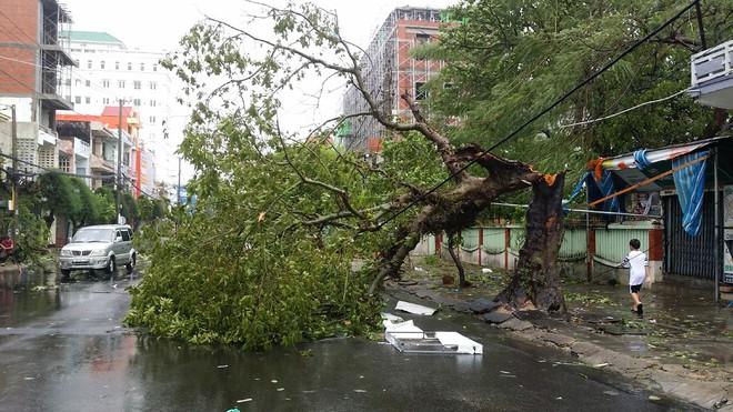 Phú Yên: Từ nhỏ tới giờ mới thấy bão gió lớn thế này, bão rít từng hồi, mái tôn đập rầm rầm - Ảnh 4.