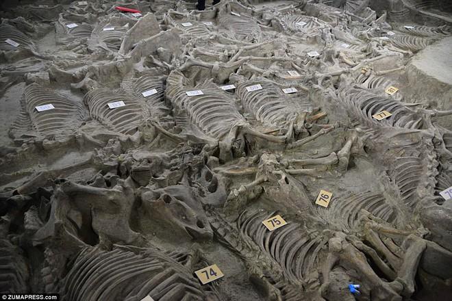 Bí ẩn cổ mộ 2.400 năm chứa hơn 100 xác ngựa ở Trung Quốc - Ảnh 5.
