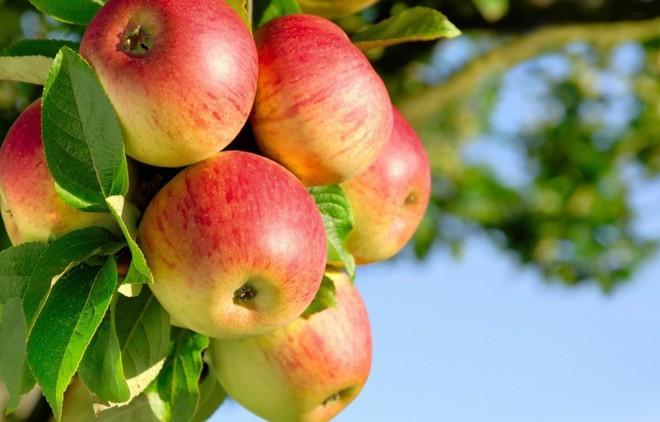 Vì sao chúng ta cần phải thải độc, thực phẩm nào có tác dụng tốt nhất? - Ảnh 5.