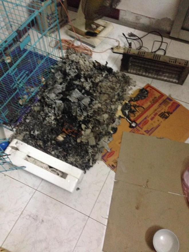 Chủ quên không tắt máy sưởi, đàn chó Poodle 8 con bị chết cháy - Ảnh 1.
