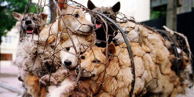 Cộng đồng phẫn nộ trước hình thức câu trộm ngày càng tinh vi ở Trung Quốc: Sử dụng phi tiêu tẩm độc giết chó - Ảnh 1.
