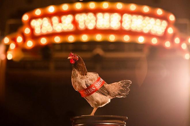 Bị chê hát như gà gáy, Chi Pu đưa luôn hình ảnh con gà vào MV mới - Ảnh 1.