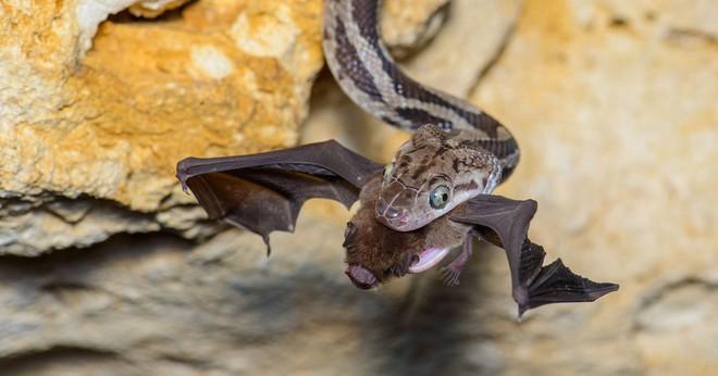 Thâm nhập hang sâu đáng sợ bậc nhất thế giới: Cơn ác mộng thực sự của người sợ rắn - Ảnh 7.