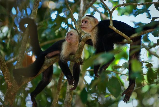 Câu chuyện phi thường của cô bé 5 tuổi bị bỏ rơi trong rừng, lớn lên cùng bầy khỉ trước khi tìm về với văn minh - Ảnh 2.