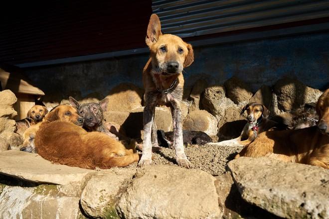 Thiên đường của hơn 900 chú chó hoang: Địa điểm hội yêu chó nhất định sẽ thích mê khi ghé thăm - Ảnh 11.