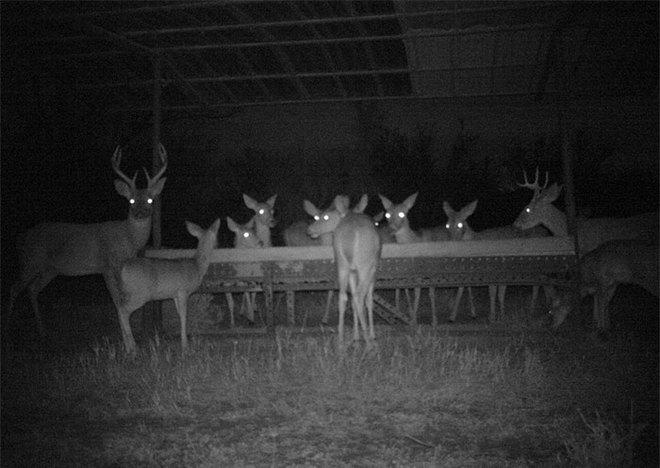 Đặt máy quay lén động vật, thợ săn bất ngờ khi thấy những hành vi kỳ lạ của chúng - Ảnh 16.