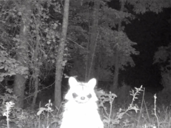 Đặt máy quay lén động vật, thợ săn bất ngờ khi thấy những hành vi kỳ lạ của chúng - Ảnh 17.