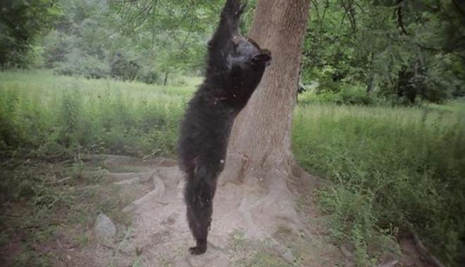 Đặt máy quay lén động vật, thợ săn bất ngờ khi thấy những hành vi kỳ lạ của chúng - Ảnh 20.