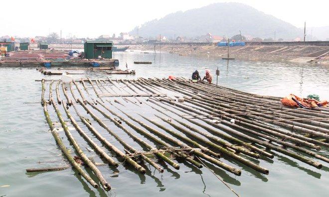 Cá sủ vàng 8kg ở Nghệ An, 900 triệu chưa bán - Ảnh 1.