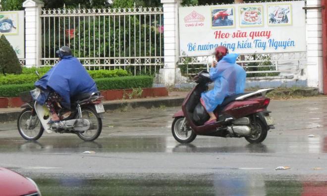 Cơn mưa quý như vàng đổ xuống Nghệ An - Ảnh 3.
