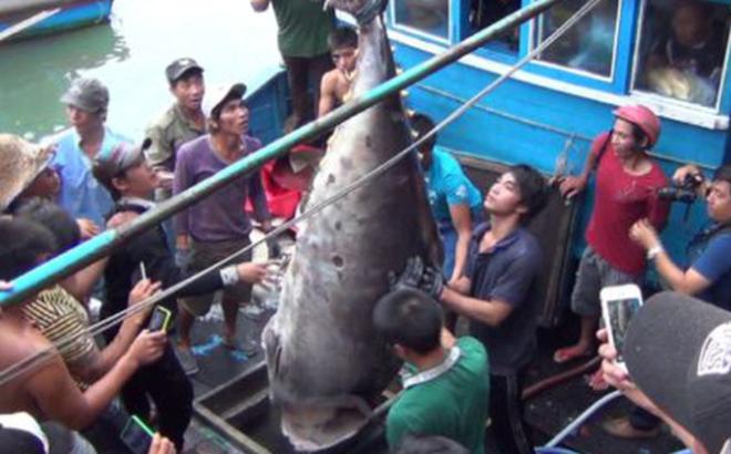 Về Hòn Rớ nghe chuyện câu cá ngừ đại dương