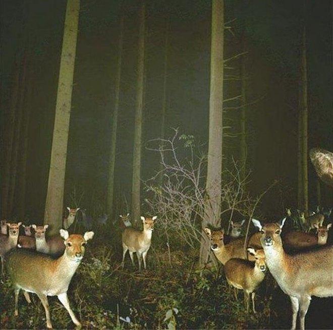 Đặt máy quay lén động vật, thợ săn bất ngờ khi thấy những hành vi kỳ lạ của chúng - Ảnh 4.