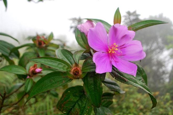 9 loại cây giải độc khi bị rắn cắn, côn trùng đốt, ngộ độc thực phẩm… - Ảnh 3.
