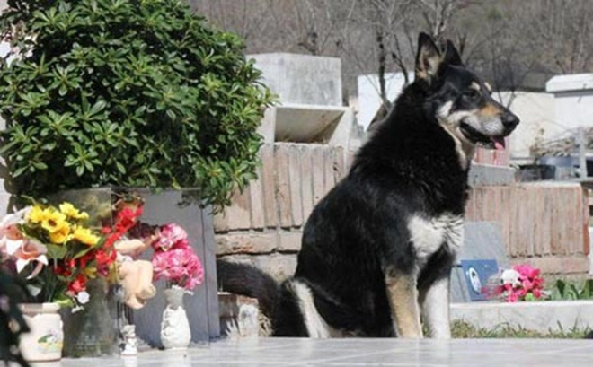 Những mẩu chuyện về chú chó trung thành khiến bạn phải bật khóc