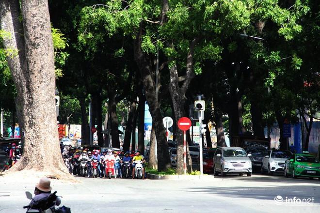 TP.HCM: Ngắm hàng cây cổ thụ gần 100 tuổi trước giờ đốn hạ và di dời - Ảnh 4.