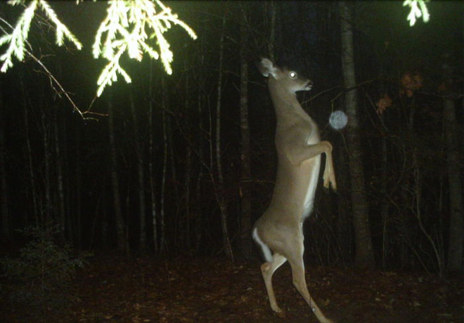 Đặt máy quay lén động vật, thợ săn bất ngờ khi thấy những hành vi kỳ lạ của chúng - Ảnh 5.