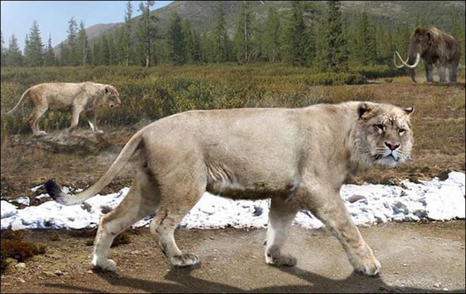 Hồi sinh xác ướp sư tử 50.000 năm tuổi bằng thí nghiệm kiểu Công viên kỷ Jura - Ảnh 4.