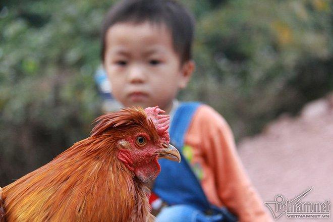 Độc đáo vua gà có râu, có mũ ở đất Quảng Ninh - Ảnh 4.