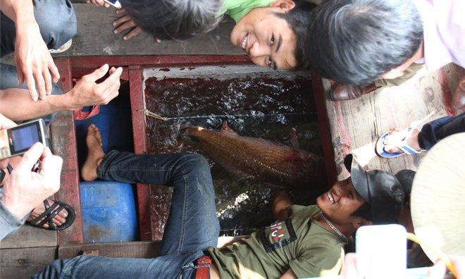 Cá sủ vàng 8kg ở Nghệ An, 900 triệu chưa bán - Ảnh 5.