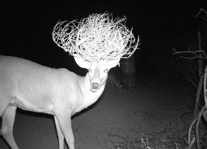 Đặt máy quay lén động vật, thợ săn bất ngờ khi thấy những hành vi kỳ lạ của chúng - Ảnh 8.