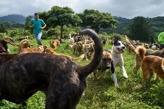 Thiên đường của hơn 900 chú chó hoang: Địa điểm hội yêu chó nhất định sẽ thích mê khi ghé thăm - Ảnh 8.