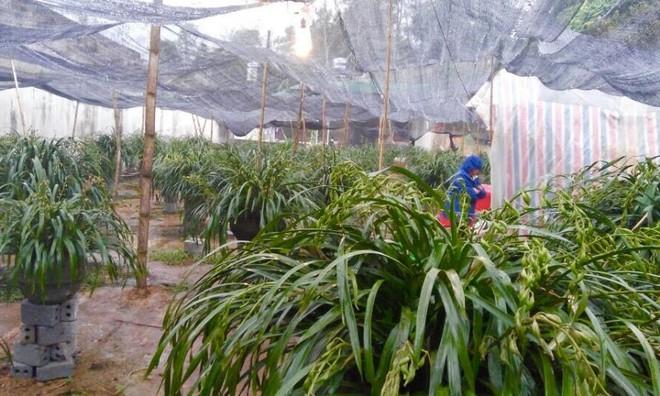 Vườn địa lan hơn 50 tỷ trên đỉnh trời Sapa - Ảnh 9.