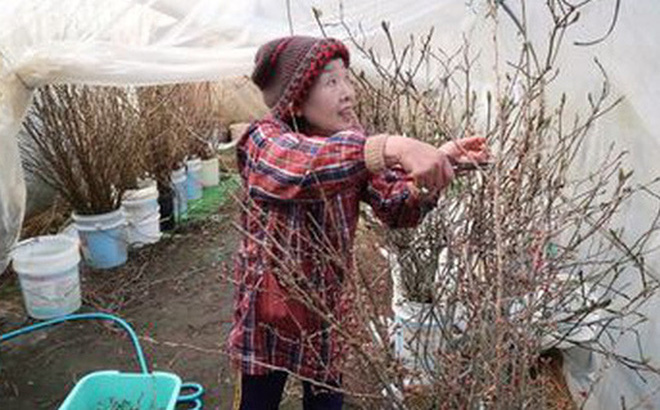 """Đây là cách người Nhật """"hồi sinh"""" những vùng quê xơ xác vì già hóa dân số"""