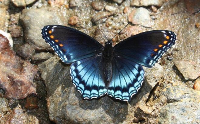 Chiến tranh tiền tệ thời hiện đại và chuyện cánh bướm châu Phi làm chao đảo niềm tự hào Việt Nam