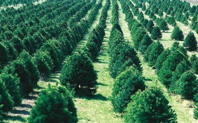 Trồng 66 triệu cái cây trong vòng 12 tiếng? Kỷ lục chỉ một dân tộc trên thế giới làm được