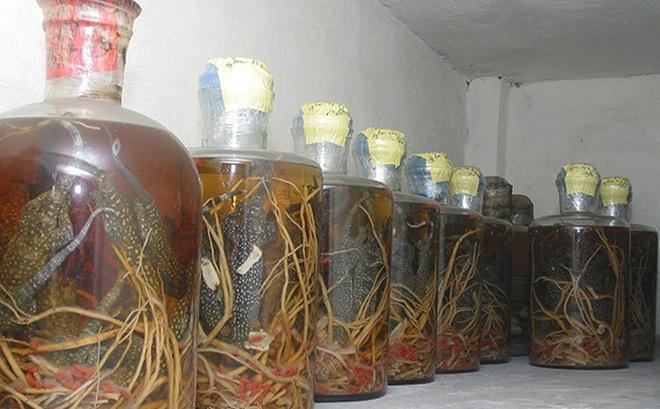 Rượu thuốc trường thọ - Không được dùng bừa
