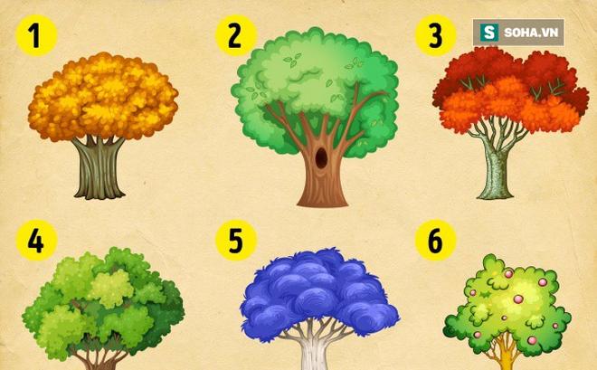 Bạn chọn cái cây nào? Điều đó sẽ tiết lộ vận may của bạn trong năm mới