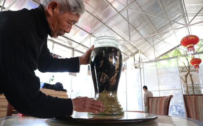 Lão nông ngâm rượu gà Đông Tảo, khách trả 150 triệu nhưng ông nhất quyết không bán