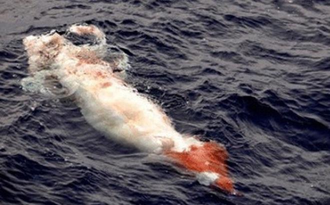 Ngư dân Ireland 2 lần bắt được loại mực khổng lồ, dài hơn 5m