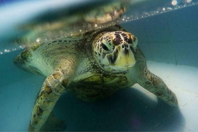 Bất ngờ phát hiện kho báu bất hạnh trong bụng 1 chú rùa Thái Lan - Ảnh 3.