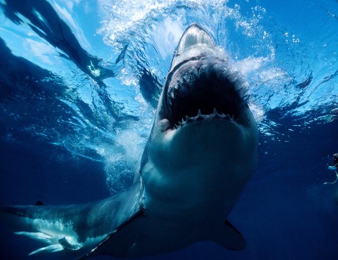 Không phải siêu cá mập Megalodon, đây mới là kẻ đầu tiên thống trị đại dương - Ảnh 2.