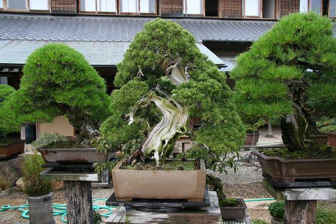 Bậc thầy bonsai Nhật và bí mật của vườn cảnh trăm tuổi được đại gia thế giới ước thèm - Ảnh 9.