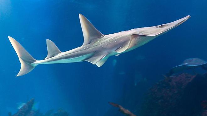 Chưa biết cá mập ở Quảng Ninh là thật hay giả, nhưng đây là những loài kỳ dị nhất! - Ảnh 3.