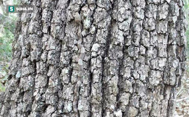 Đây chỉ là một gốc cây bình thường, nhưng chạm vào bạn sẽ mất mạng ngay!