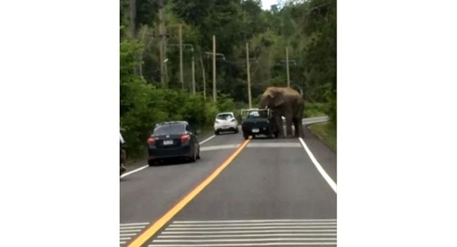 Đói bụng, voi hoang dã bất ngờ chặn xe, cướp hoa quả của người đi đường - Ảnh 1.