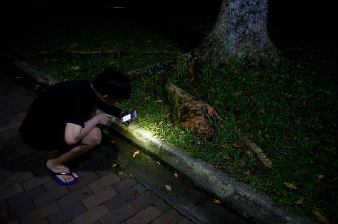 Săn kiến - thú vui mới nổi của người Singapore - Ảnh 5.