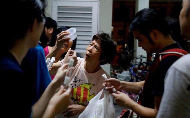 Săn kiến - thú vui mới nổi của người Singapore